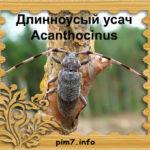 Изображение длинноусого дровосека