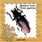 Изображение жука усача титана