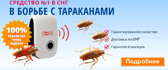 Как избавиться от рыжего таракана в квартире