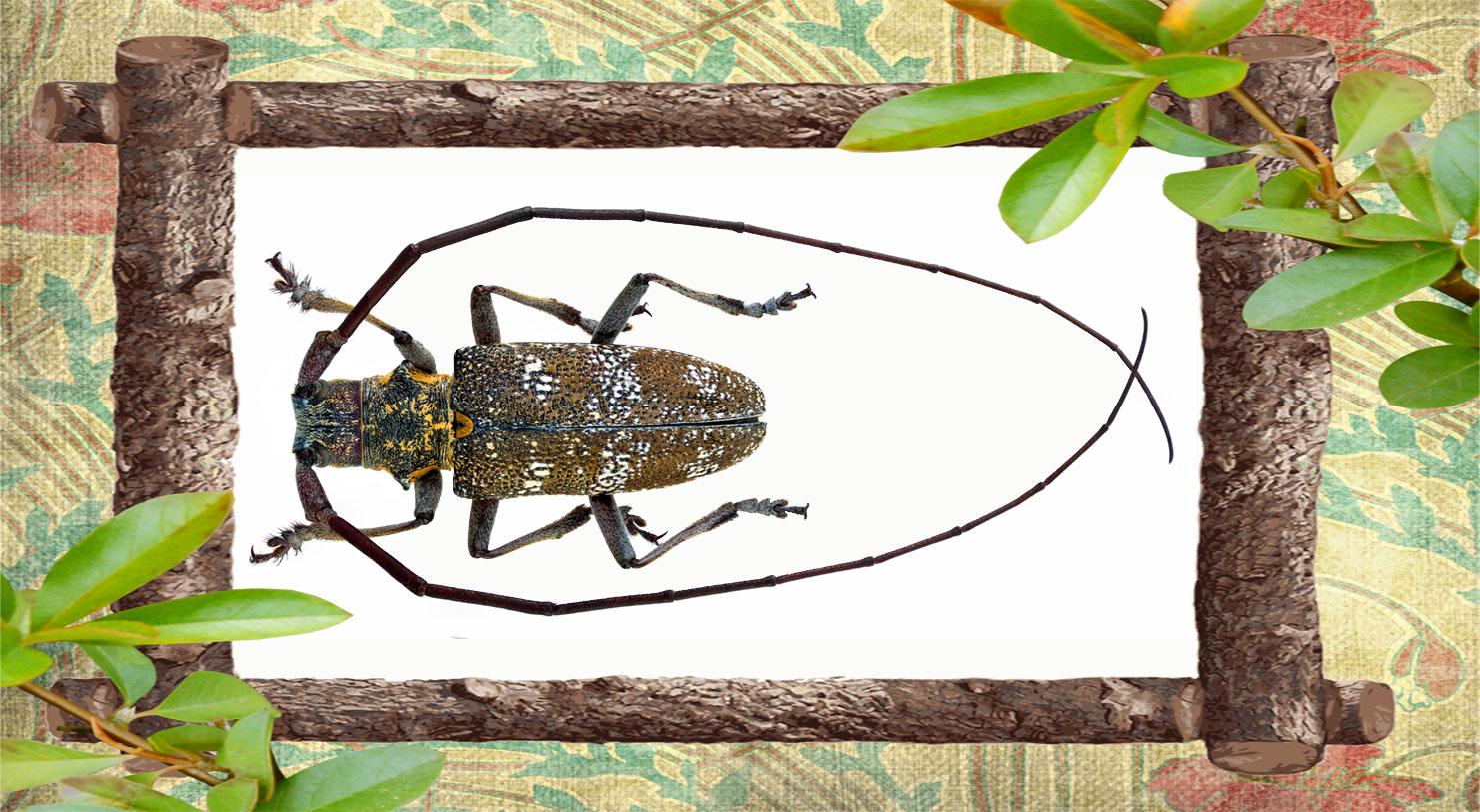Изображение жука усача