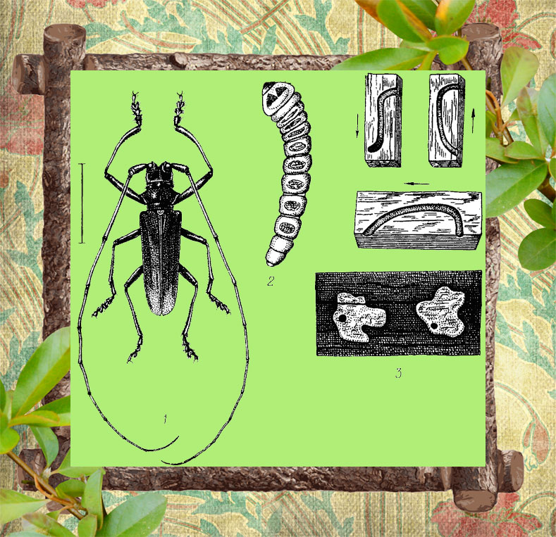 Фото стадии развития жука усача