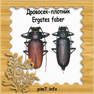 Изображение жук усач плотник в рамке