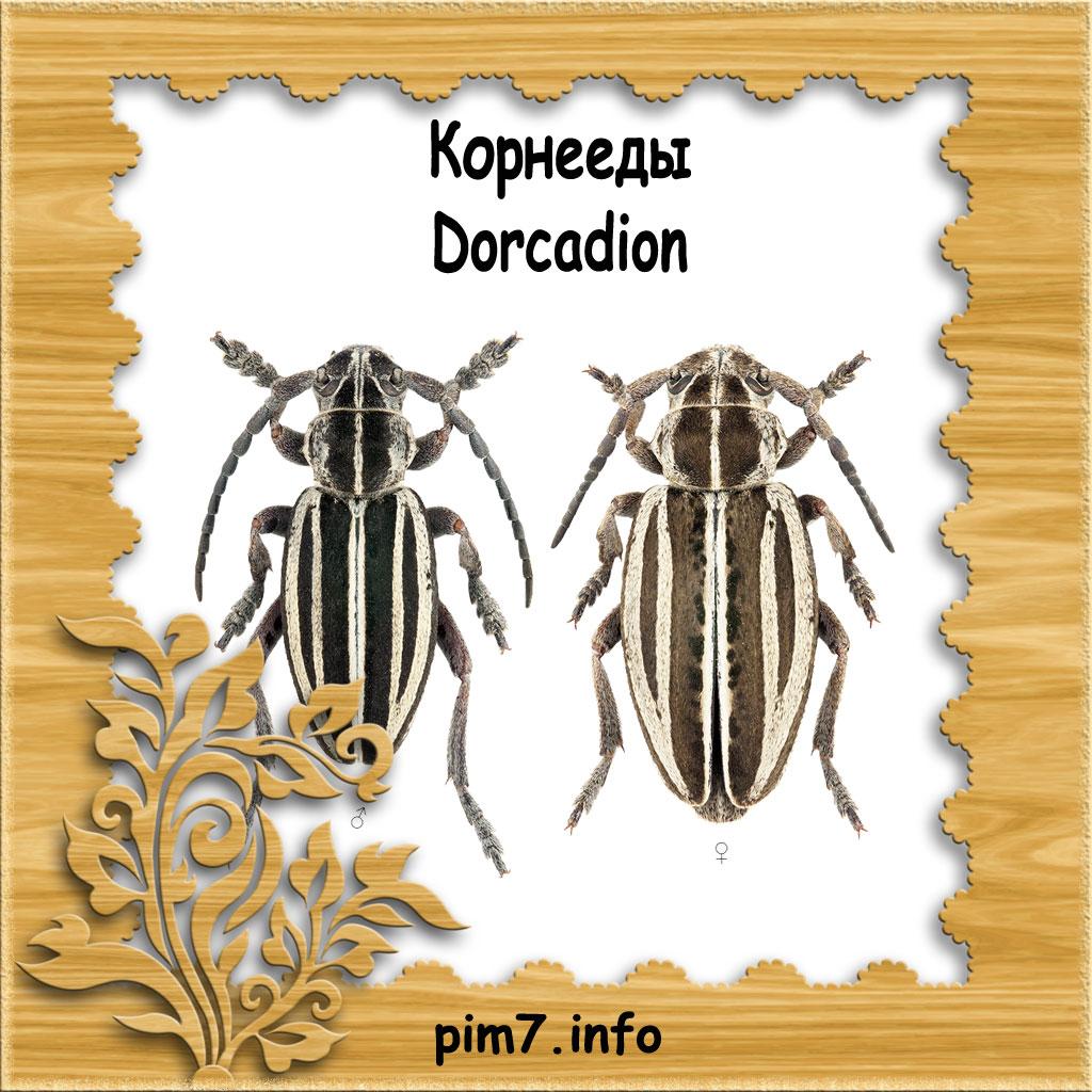 Изображение жук усач корнеед