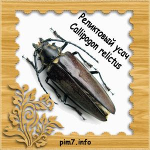 Изображение жук усач реликтовый в рамке