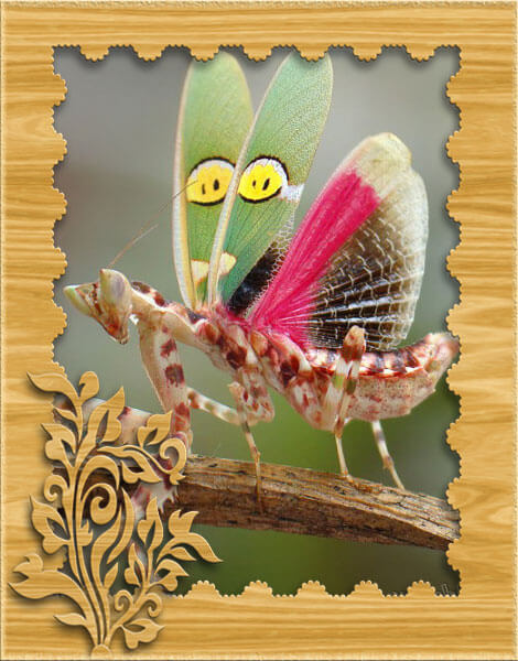 Изображение цветочного богомола