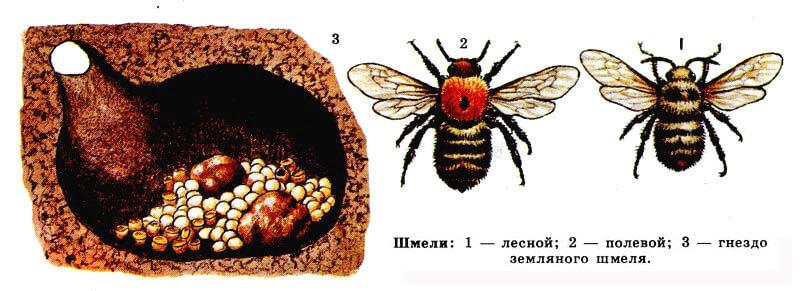 Изображение улья шмеля